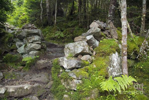 Photograph - Stone Gate - Edmands Path - White Mountains New Hampshire  by Erin Paul Donovan