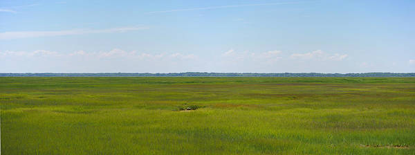 Photograph - Stone Harbor Wetlands by Richard Reeve