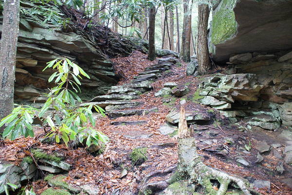 Wall Art - Photograph - Stone Path by Heather Green