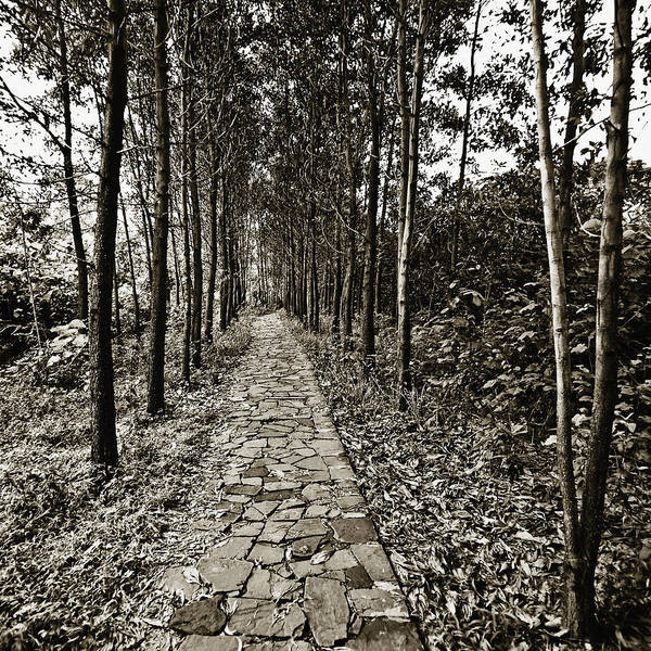 Wall Art - Photograph - Stone Path Lined By Trees by Skip Nall