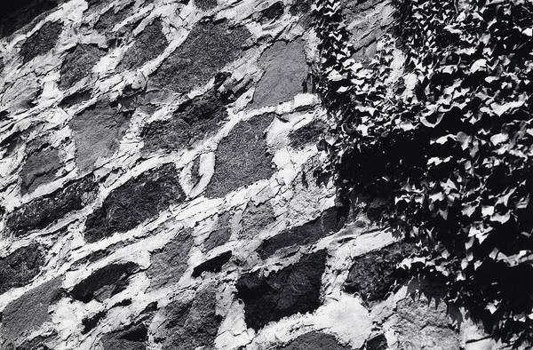 Stone Wall With Ivy Art Print