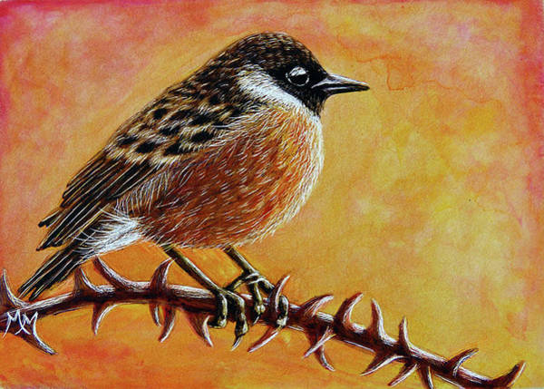 Painting - Stonechat by Monique Morin Matson
