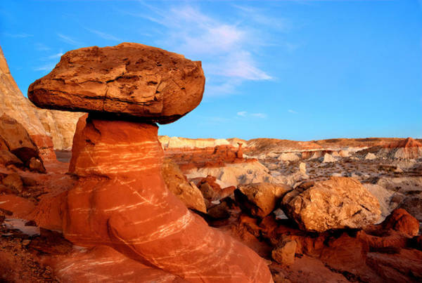 Photograph - Stool For A Big Toad by David Andersen