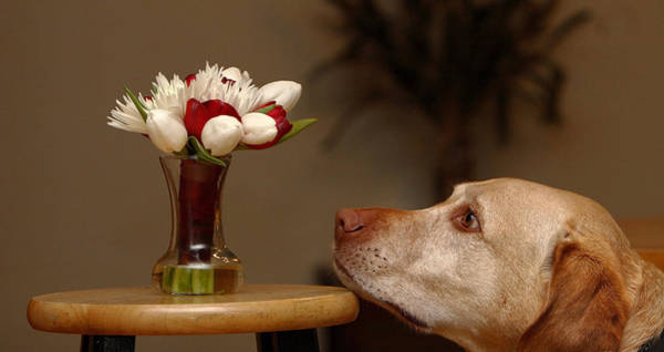 Photograph - Stop And Smell The Roses by David Andersen