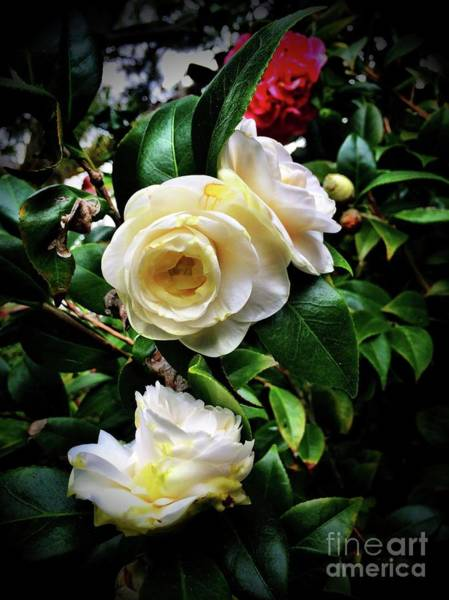 Photograph - Stop And Smell The Roses  by S Forte Designs