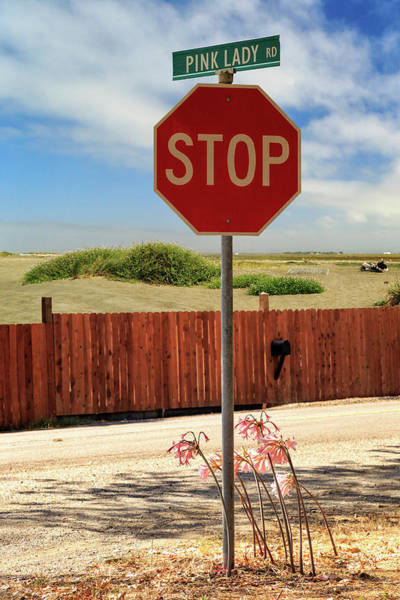 Photograph - Stop For Naked Ladies by James Eddy