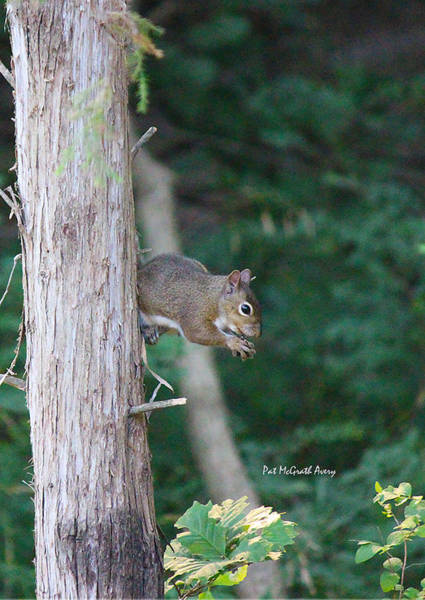Photograph - Stopping For A Snack by Pat McGrath Avery