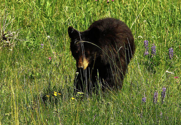 Photograph - Stopping To Smell The Flowers by Frank Vargo