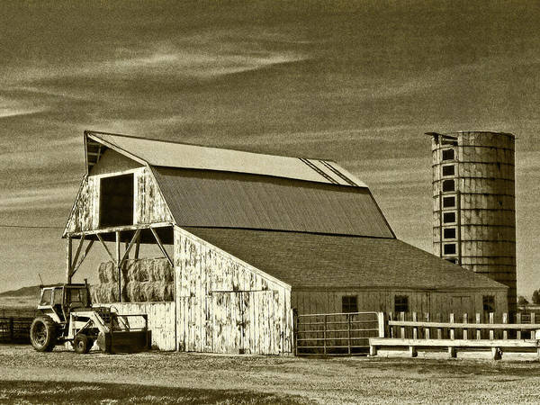 Photograph - Stored Up For The Winter Sepia by David King