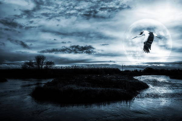 Wall Art - Photograph - Stork In Moonlight by Jaroslaw Grudzinski