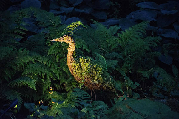 Photograph - Stork Topiary At Dusk by Michael Bessler