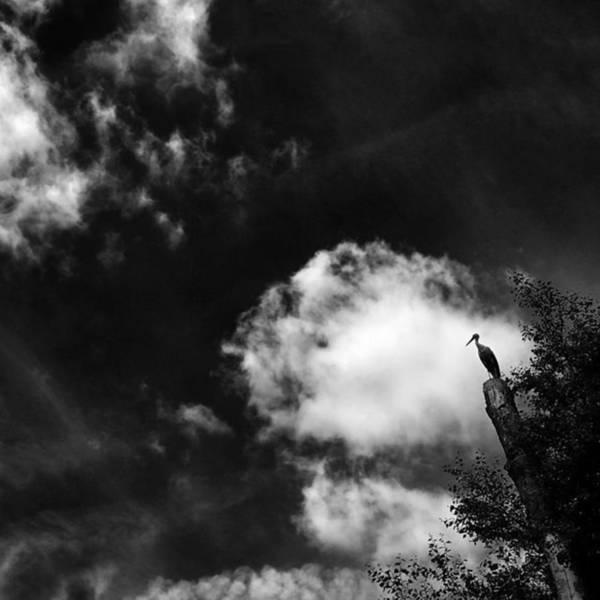 Wall Art - Photograph - Stork #stork #bird #tree #animals #sky by Rafa Rivas