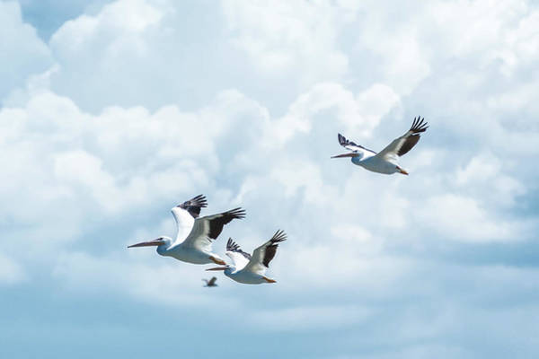 Wall Art - Photograph - Storks by Happy Home Artistry