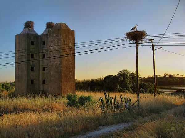 Photograph - Storks Near Setubal Portugal by Menega Sabidussi