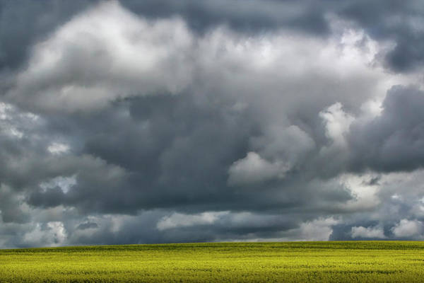 Photograph - Storm Cloud Over A Canola Field by Randall Nyhof
