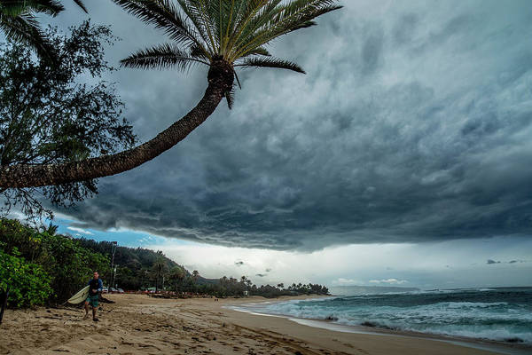 Wall Art - Photograph - Storm Cloud Palm by Sean Davey