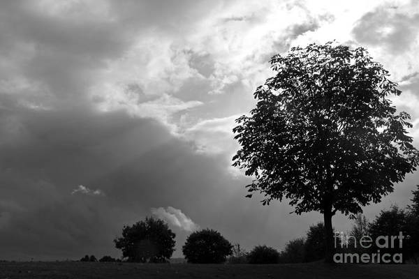 Photograph - Storm Clouds And Tree by Julia Gavin