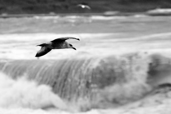 Photograph - Storm Flight by Peter OReilly