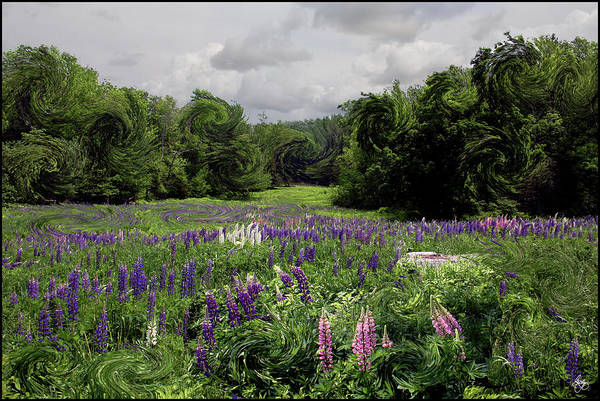 Photograph - Storm In The Lupine by Wayne King