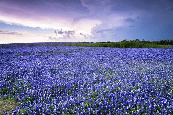 Wall Art - Photograph - Storm Is Coming In Wildflower Field - Bluebonnet by Ellie Teramoto