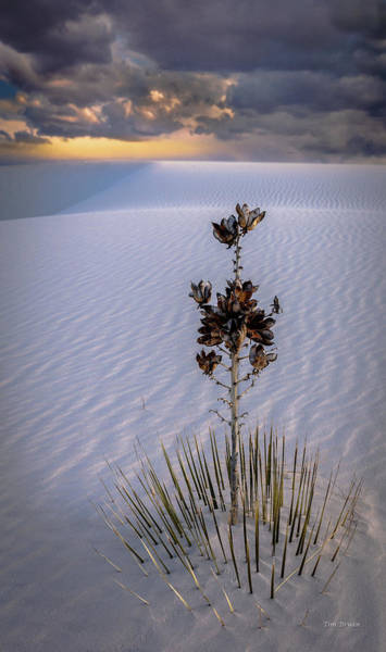 Photograph - Storm Light At White Sands by Tim Bryan