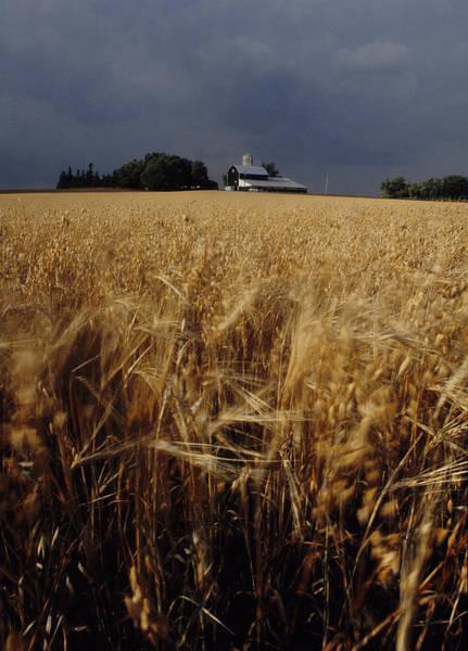 Storm Over Wheat Field  Art Print