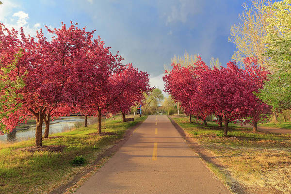 Colorado Springs Photograph - Storm Passes Over Blossoming Crab Apple Trees On A Bike Path In  by Bridget Calip