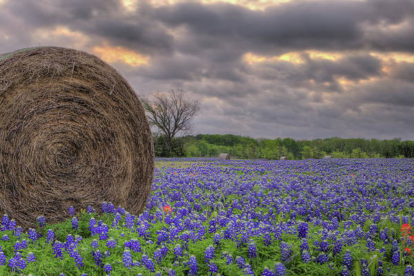 Photograph - Storms And Bluebonnets by JC Findley