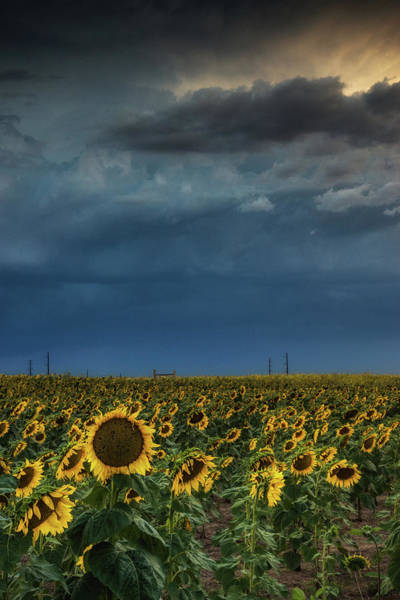 Photograph - Storms Over The Sunflowers II by John De Bord