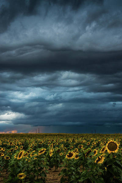 Photograph - Storms Over The Sunflowers by John De Bord