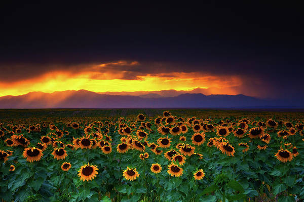 Photograph - Storms, Sunflowers, And Sunsets by John De Bord