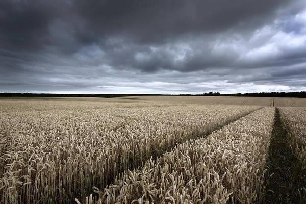 Cornfield Photograph - Stormy Cornfields by Ian Hufton