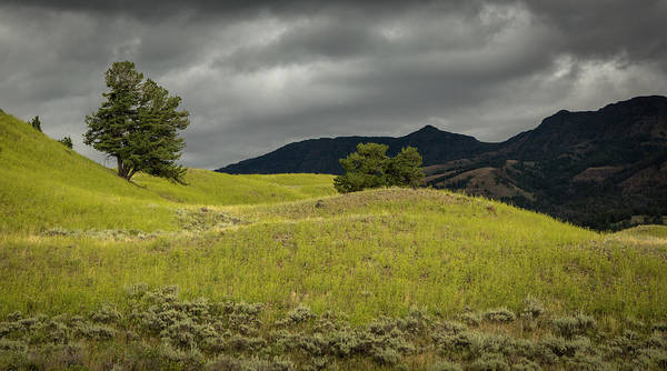 Photograph - Stormy Fields Of Yellow by Bryant Coffey