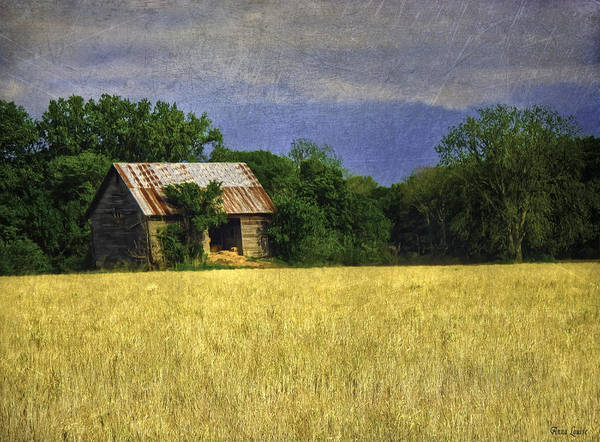 Photograph - Stormy Old Barn In Wheat Field by Anna Louise