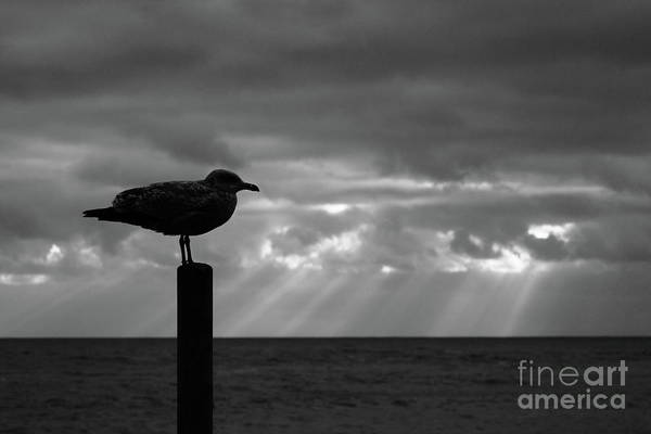 Photograph - Stormy Sentinel by James Brunker