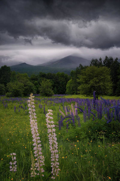 Photograph - Stormy Skies by Darylann Leonard Photography