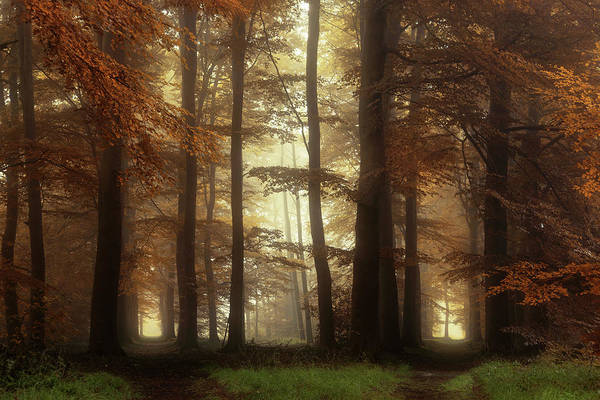 Wall Art - Photograph - Strade Diverse by Martin Podt