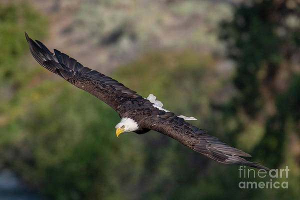 Wingspan Photograph - Straight On by Mike Dawson