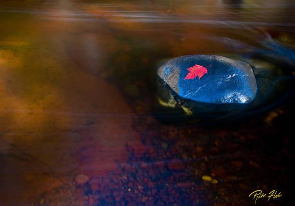 Photograph - Stranded Leaf by Rikk Flohr