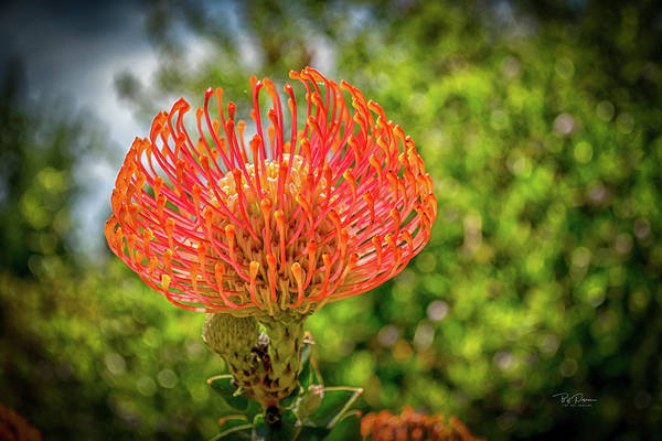 Photograph - Strange Flower by Bill Posner