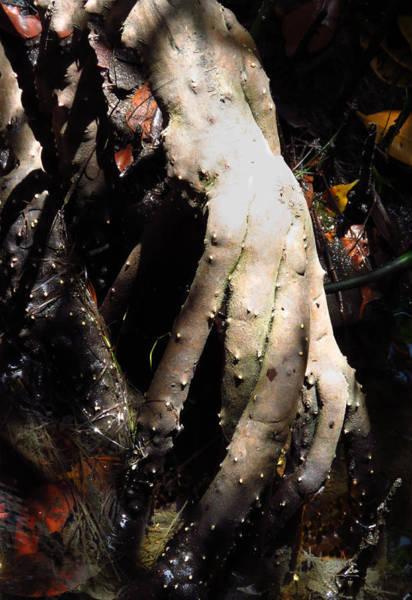 Photograph - Strange Hand by Rosalie Scanlon