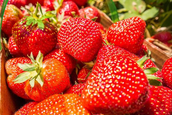 Photograph - Strawberries In Natural Background by Alex Grichenko