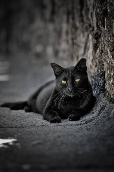 Photograph - Stray Cat by Edgar Laureano