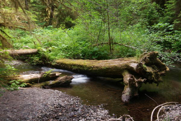 Treen Photograph - Stream And A Fallen Snag by Jeff Swan