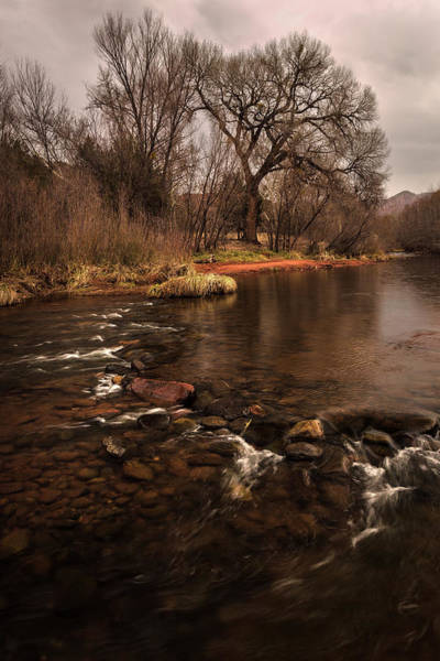 Photograph - Stream And Tree by Rick Strobaugh