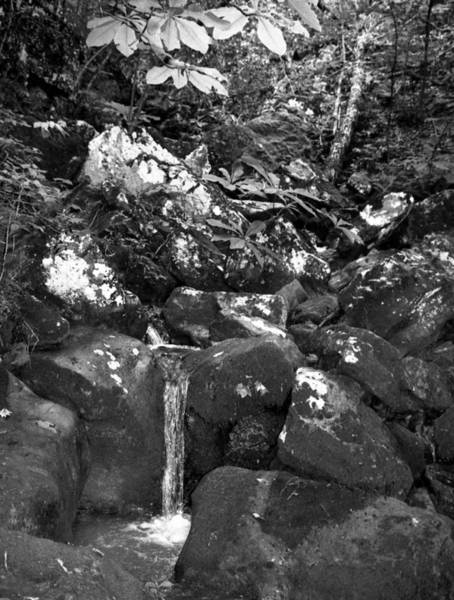 Photograph - Stream by Curtis J Neeley Jr