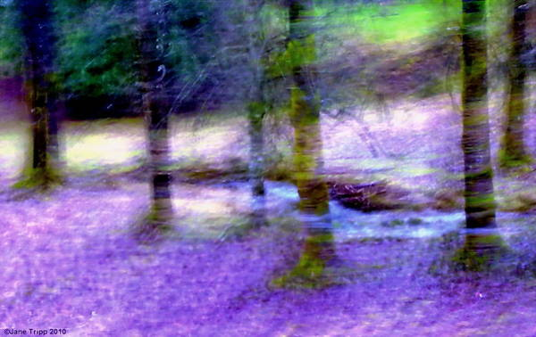 Wall Art - Photograph - Stream Displaced  by Jane Tripp