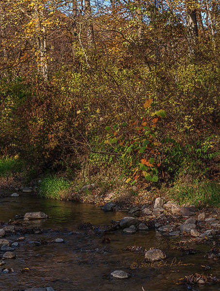 Photograph - Stream In Fall Colors by Edward Peterson
