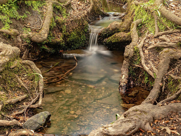 Wall Art - Photograph - Stream In Judy Woods by Mike Walker