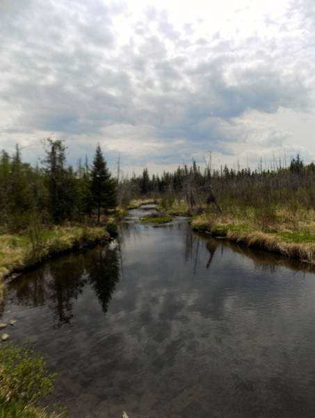 Aroostook Photograph - Stream Reflections by William Tasker